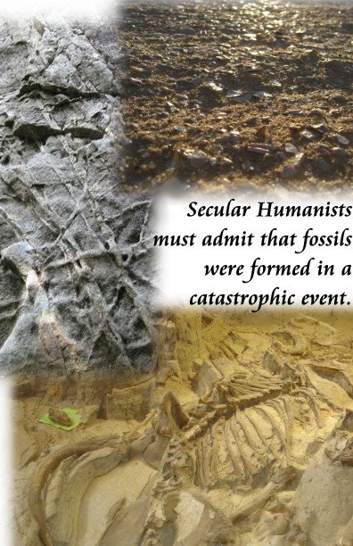 14 fossils catastrophic