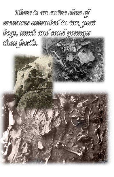 frozen tar non fossils