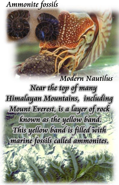 marine fossils mt everest