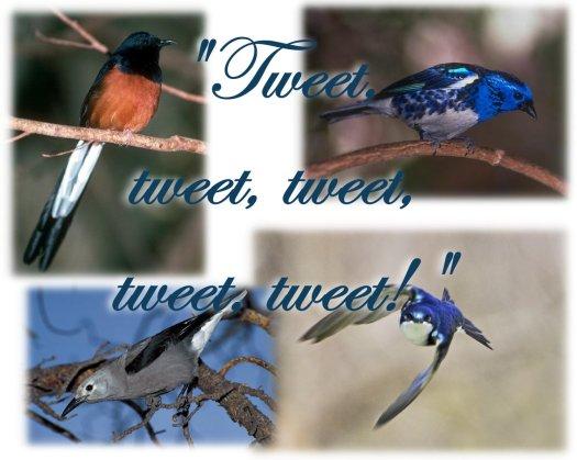 birds tweeting
