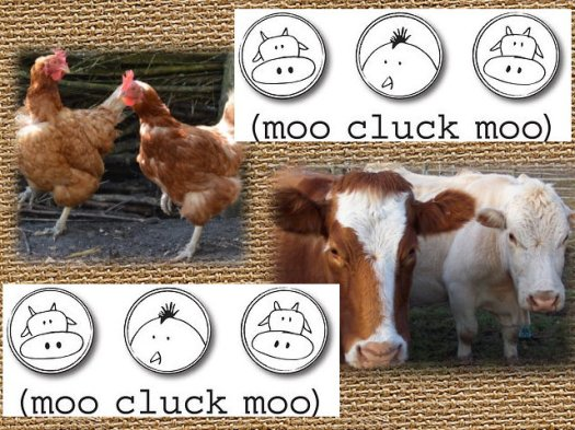 moo cluck moo graphic