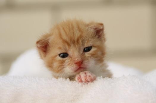 cat-329215_640
